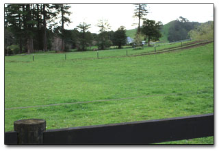 Horse paddocks at Chester Farm
